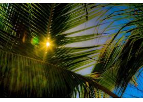 阳光,自然,手掌,树,壁纸,图片