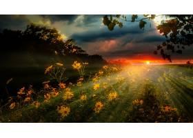 阳光,自然,日出,花,黄色,花,壁纸,图片