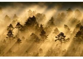 雾,自然,森林,树,阳光,壁纸,图片