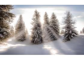 阳光,自然,树,冬天的,雪,壁纸,图片