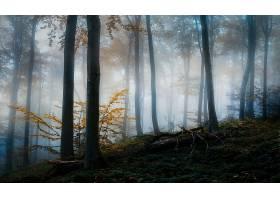 雾,自然,森林,树,鹿,壁纸,图片