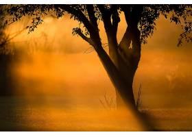 阳光,自然,树,壁纸,(3)图片