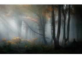 雾,自然,森林,秋天,壁纸,图片
