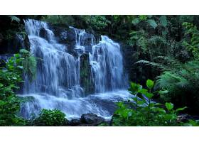 瀑布,瀑布,自然,森林,壁纸,(1)图片