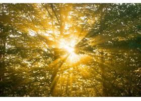 阳光,自然,树,壁纸,(6)图片