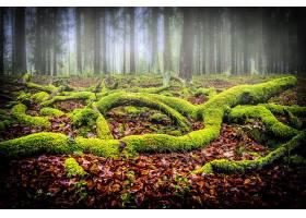 雾,自然,森林,苔藓,壁纸,图片