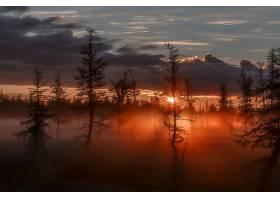 雾,自然,森林,阳光,云,天空,日出,壁纸,图片