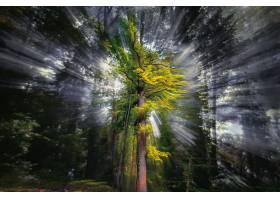 阳光,自然,树,壁纸,图片