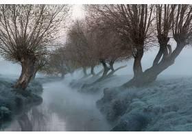 雾,自然,河,树,绿树成荫,壁纸,图片