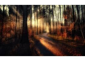 阳光,自然,树,小路,森林,壁纸,图片