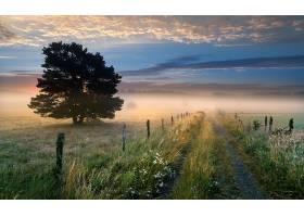 雾,自然,泥土,路,天空,树,领域,壁纸,图片