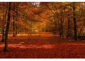 秋天,森林,小路,叶子,壁纸,