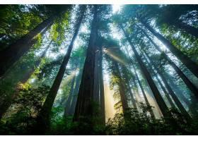 阳光,自然,树,树顶酒店,森林,壁纸,图片