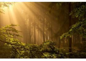 阳光,自然,树,森林,壁纸,(1)图片