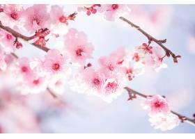 地球,花,花,树枝,自然,花,粉红色,花,弹簧,壁纸,图片