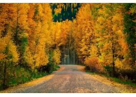 秋天,森林,树,叶子,自然,路,壁纸,