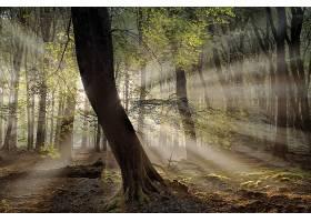 阳光,自然,树,森林,壁纸,图片