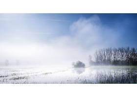 雾,自然,湿地,壁纸,图片