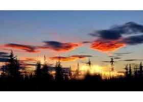 日出,自然,天空,云,森林,壁纸,图片