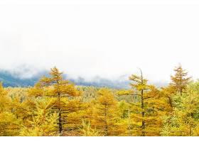 秋天,森林,自然,树,壁纸,