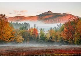 雾,自然,秋天,树,叶子,山,风景,壁纸,图片