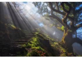 阳光,自然,树,步伐,壁纸,图片