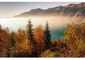 雾,自然,秋天,树,山,壁纸,图片