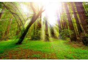 阳光,自然,树,温室,森林,壁纸,图片