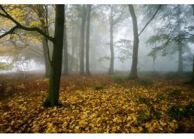 雾,自然,秋天,树,森林,壁纸,图片