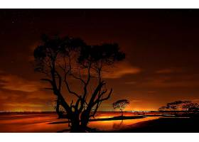 日落,橙色的,树,轮廓,自然,天空,壁纸,图片
