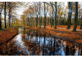 秋天,河,公园,树,反射,壁纸,