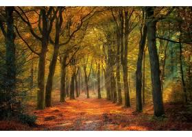 阳光,自然,树,秋天,森林,壁纸,图片
