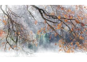 雾,自然,秋天,树枝,壁纸,图片
