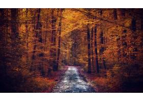 秋天,泥土,路,自然,森林,叶子,树,壁纸,