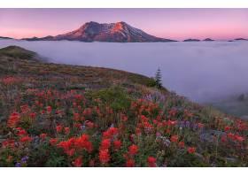 雾,自然,花,风景,山谷,山,壁纸,图片