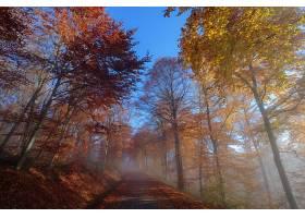 秋天,泥土,路,自然,森林,树,叶子,雾,壁纸,