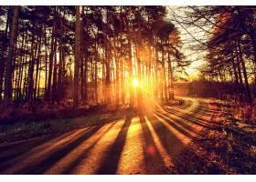 阳光,自然,树,路,壁纸,图片