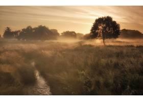 雾,自然,阳光,溪流,树,壁纸,图片