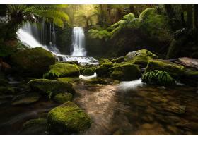 瀑布,瀑布,森林,雨林,岩石,植物,蕨,温室,壁纸,图片