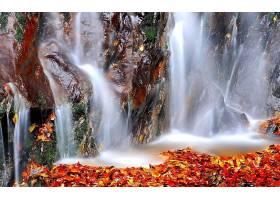 秋天,瀑布,自然,叶子,水,岩石,壁纸,