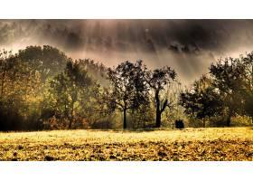 阳光,自然,树,雾,壁纸,(1)图片