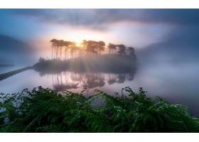 雾,自然,阳光,蕨,湖,反射,壁纸,图片