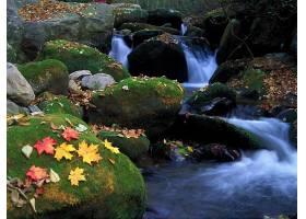 秋天,瀑布,自然,叶子,苔藓,岩石,水,壁纸,