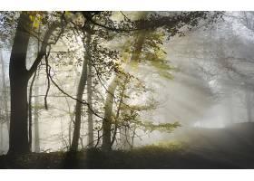 阳光,自然,树,雾,壁纸,图片