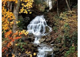 秋天,瀑布,自然,森林,水,壁纸,