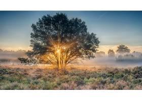 阳光,自然,树,雾,日出,壁纸,图片