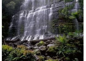 瀑布,瀑布,自然,植物,丛林,苔藓,壁纸,图片