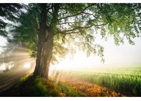 阳光,自然,树,领域,壁纸,(1)图片