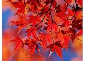 秋天,自然,叶子,壁纸,