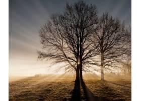 阳光,自然,树,领域,壁纸,图片